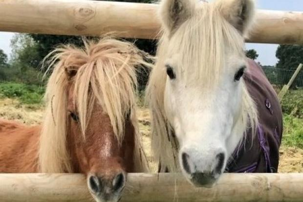 The Healing Horse Sanctuary in Wythall needs to raise £10,000.