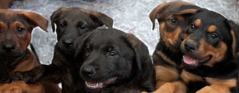Abandoned puppies ready to go to new homes