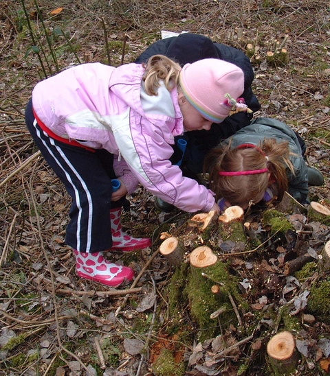 Youngsters explore Piper's Wood nature reserve.