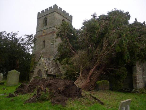 The large tree fell on St Michael's Church, Salwarpe.