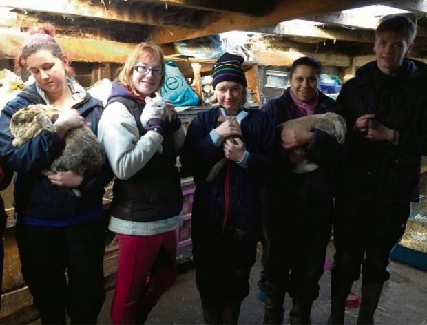 Helping out with the animals at Gloverspiece: (from left) Lucinda Blackmore, Chloe Wood, Abigail Drew, Sophia Jackson and George Hemming. SP