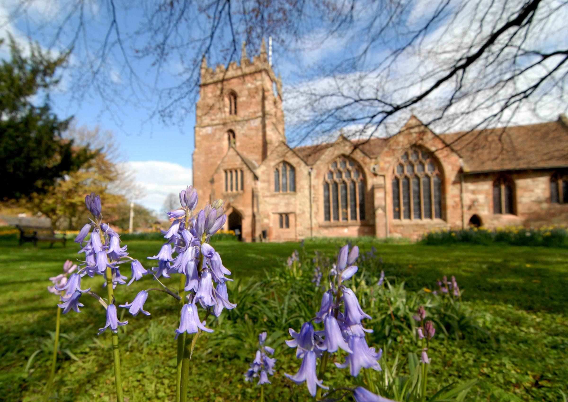 1514573401. 13/04/14. Bluebells in the grounds of St John in Bedwardine church. Picture by Ni