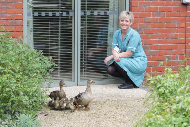Senior healthcare assistant Lisa Laurie with the ducklings. SP