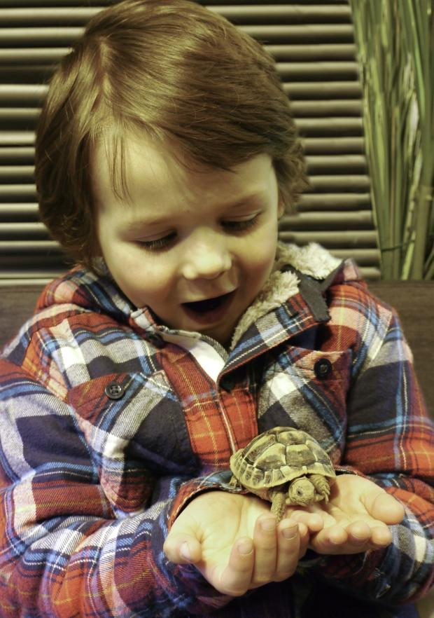 Droitwich Advertiser: Marcus Osborne with a tortoise at Webbs. SP