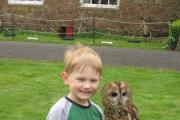 Joseph Darby meets an owl at Hartlebury Museum.
