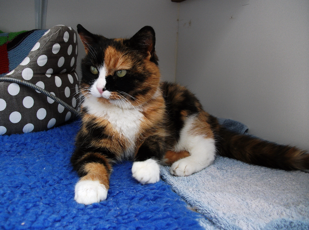 Penny, Worcester and District Cats Protection